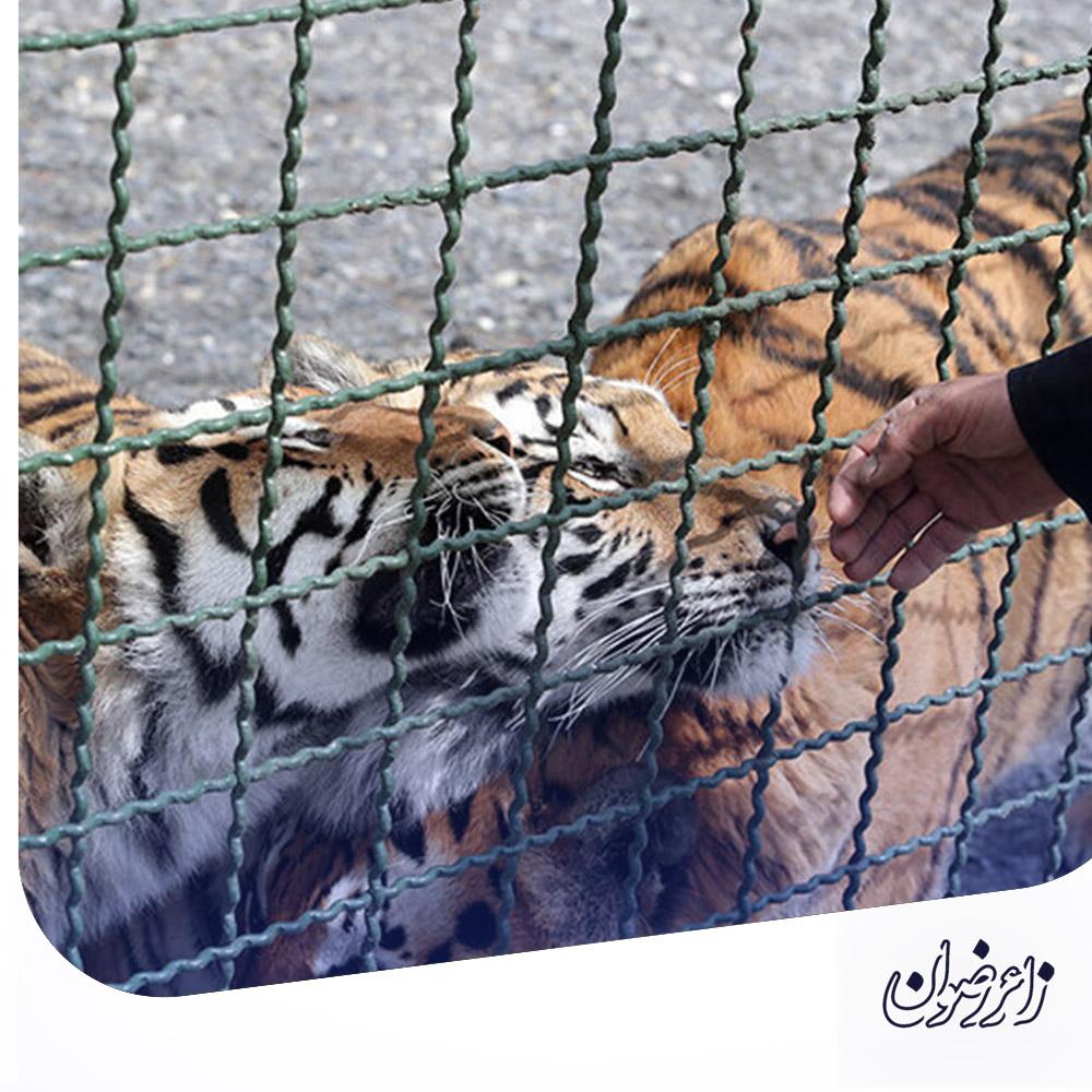 bvakilabad2 - باغ وحش وکیل آباد مشهد