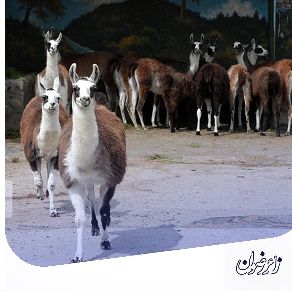 bvakilabad5 - باغ وحش وکیل آباد مشهد